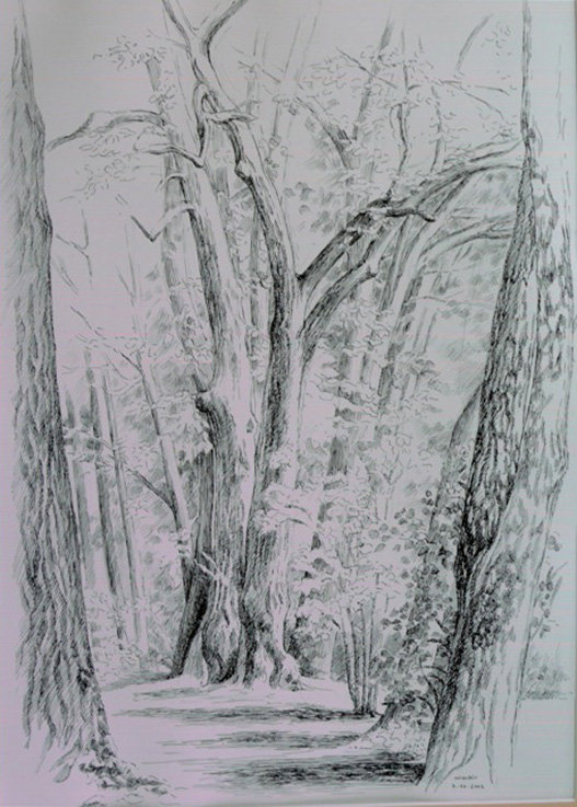 Marie-Noëlle Goffin, Arbres sylvère, dessin (© MN. Goffin)