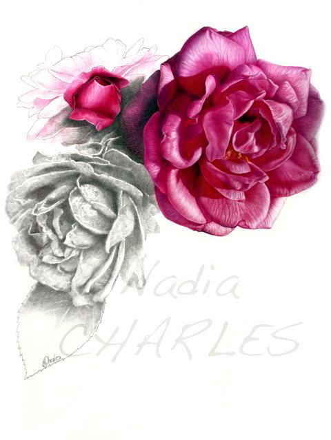 Nadia Charles, Rose ancienne, Rosa borbonnia, crayons graphite et de couleur, 2017 (© N. Charles)