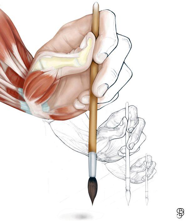 Dessin anatomique, 2009, commande non publiée pour illustrer un article édité par l'INRS « Corps, main et outil à main » (© S. Bougault)
