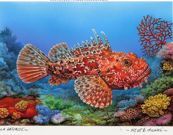 Monaco. Faune marine, Rascasse rouge, timbre préoblitéré, 2014 (création de Bernard Alunni et Marie-Christine Lemayeur, impression offset). Maquette. (© Alunni-Lemayeur)