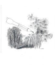 Bambous, burin, gravure n° 3 - 2006 (dessin et gravure : Luquet Eve)