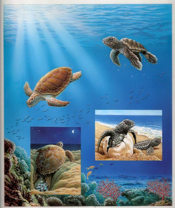 Monaco. Musée océanographique de Monaco. Les tortues marines, 2016  (création de Bernard Alunni et Marie-Christine Lemayeur, impression héliogravure et vernis sélectif 3D). Maquette. (© Alunni-Lemayeur)